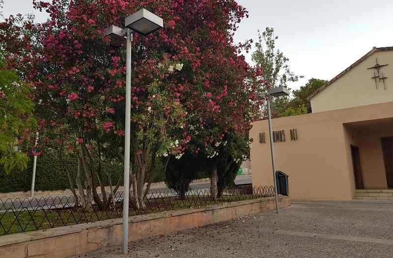 Oleanderbaum-und-Lampe-neben-der-Kirche-Paguera