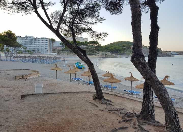 Playa-Tora-Paguera-zwischen-Pinienbaeumen